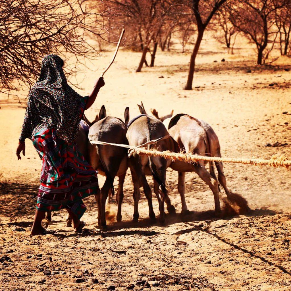 Donkeys and Liquid Gold